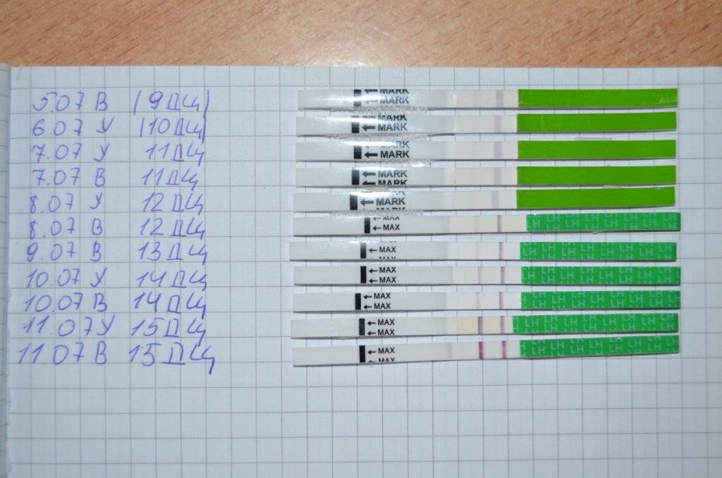 Может ли тест на овуляцию показать беременность на ранних сроках до задержки?   konstruktor-diety.ru