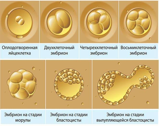 Эко в естественном цикле