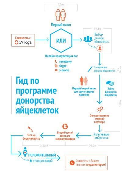 Стать донором яйцеклеток (ооцитов), сколько платят донору яйцеклетки
