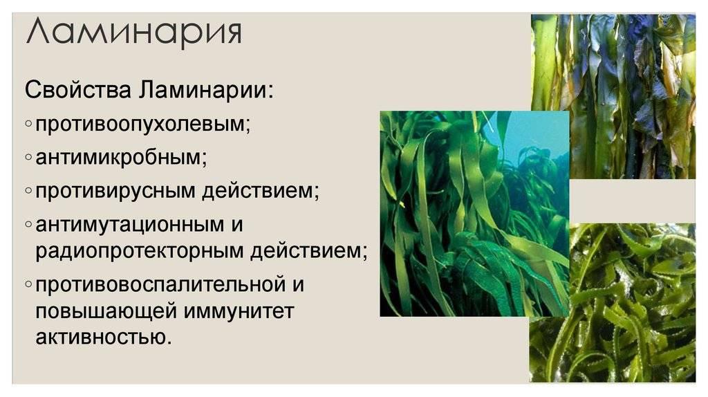 Морская капуста при беременности: какие витамины, можно ли беременным есть, сколько йода, чем полезен салат   rucheyok.ru