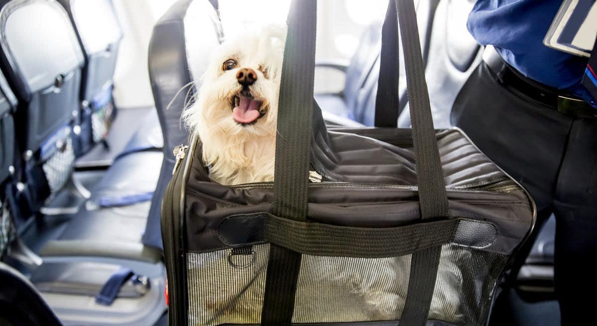 Коляска в самолет: нюансы и советы для путешественников с детьми