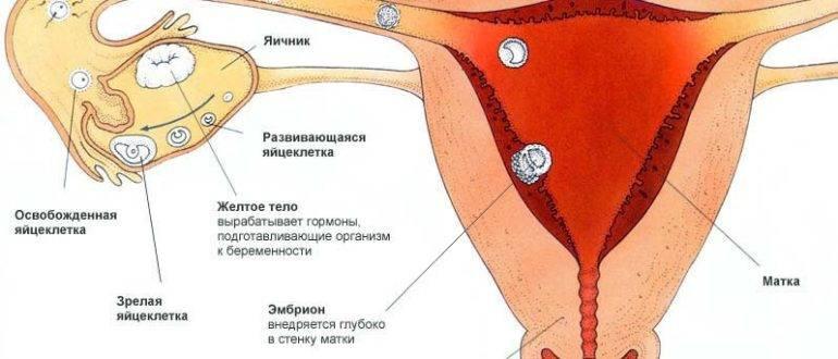 Выделения из влагалища и их лечение