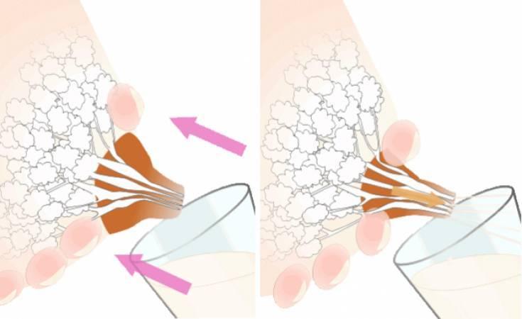 Как правильно сцеживать грудь руками