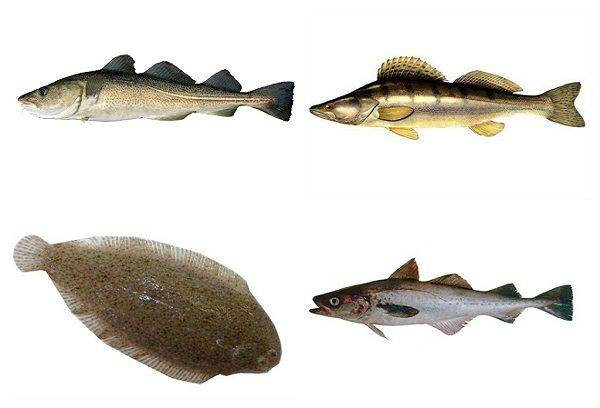 Рыба при грудном вскармливании: какую можно кормящей маме