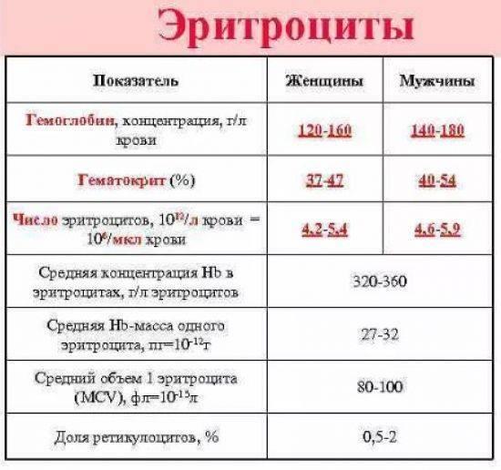 Эритроциты в анализах крови (rbc). норма и отклонения