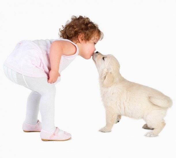 Ребенок и домашние животные - полезные советы - agulife.ru