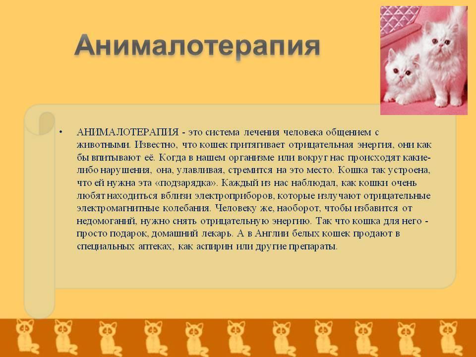 Анималотерапия – лечение животными