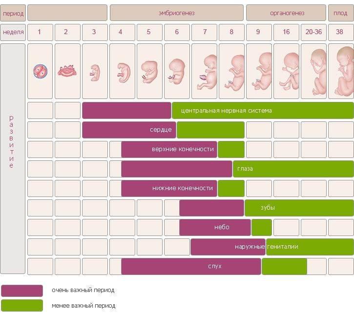 Сколько недель длится беременность и какие средние цифры этого срока существуют у женщин