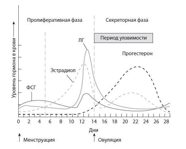 Повышен лг и фсг - значение, последствия. соотношение лг и фсг | клиника «центр эко» в калининграде