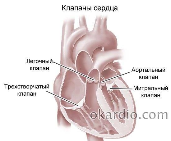Подготовка к узи сердца - статья от семейной клиники