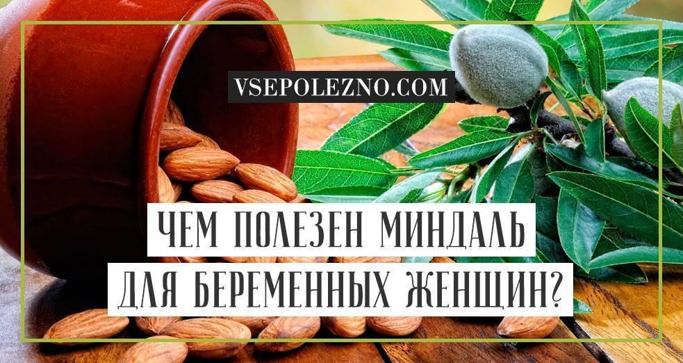 Миндаль при беременности: сколько можно есть в день, чем полезен для организма, какой полезнее, жареный или сырой | rucheyok.ru