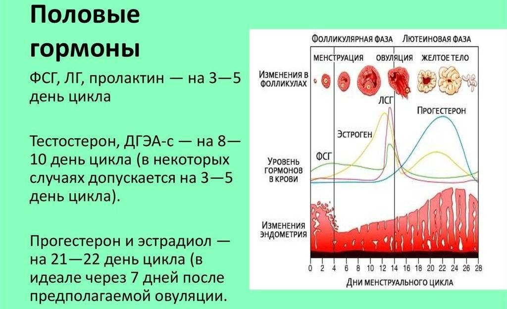 На какой день цикла наступает овуляторная фаза и какие у нее особенности?