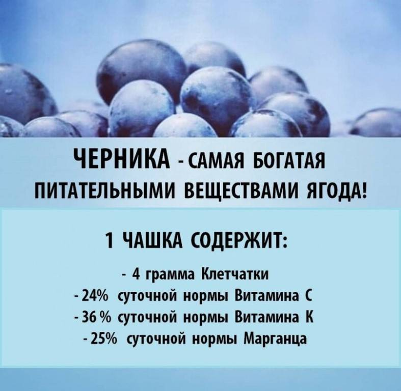 Голубика – польза голубики, чем полезна, калорийность, полезные свойства