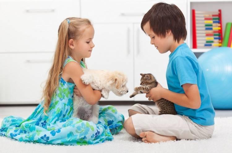 Влияние домашних животных на развитие ребенка: кошки, собаки, птицы и попугайчики, хомячки, морские свинки и рыбки — как они влияют на развитие и воспитание ребенка.