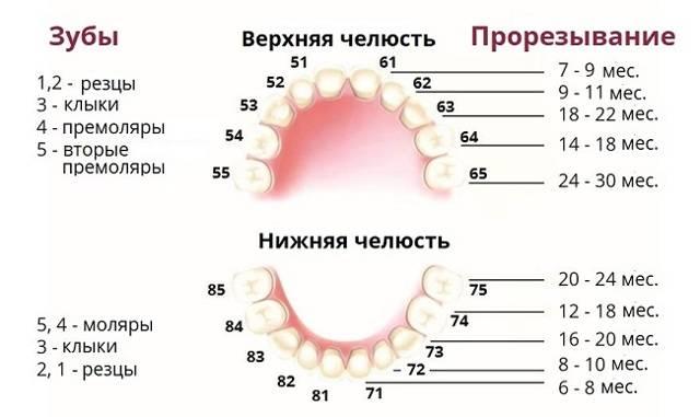 Лечение молочных зубов. все о методах лечения и приинах развития заболеваний зубов у детей.
