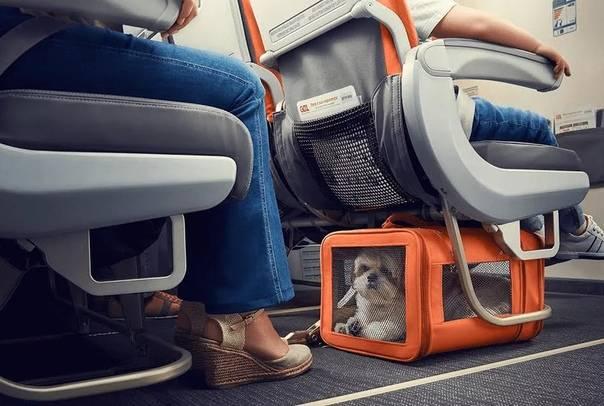 Как перевозить коляску в самолете: правила перевозки