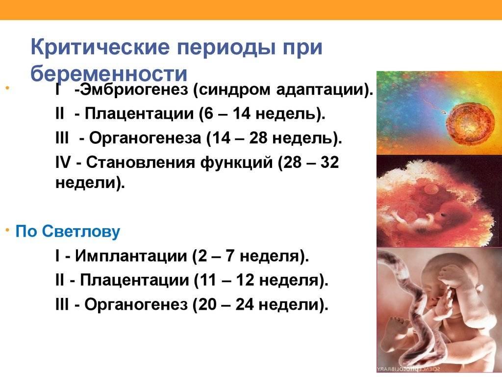 ᐉ самые опасные недели беременности по триместрам. критические периоды беременности - ➡ sp-kupavna.ru