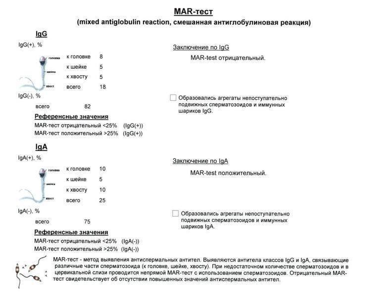 Mar-тест - определение антиспермальных антител