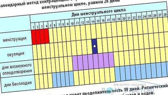 Фертильные дни – что это значит, окно фертильности в женском календаре, можно ли забеременеть в этот период
