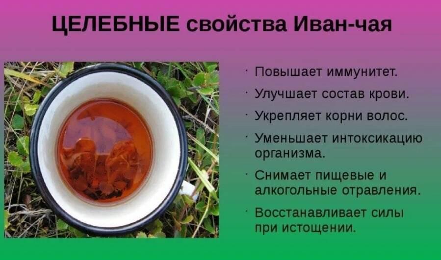 Иван чай при грудном вскармливании: рекомендации