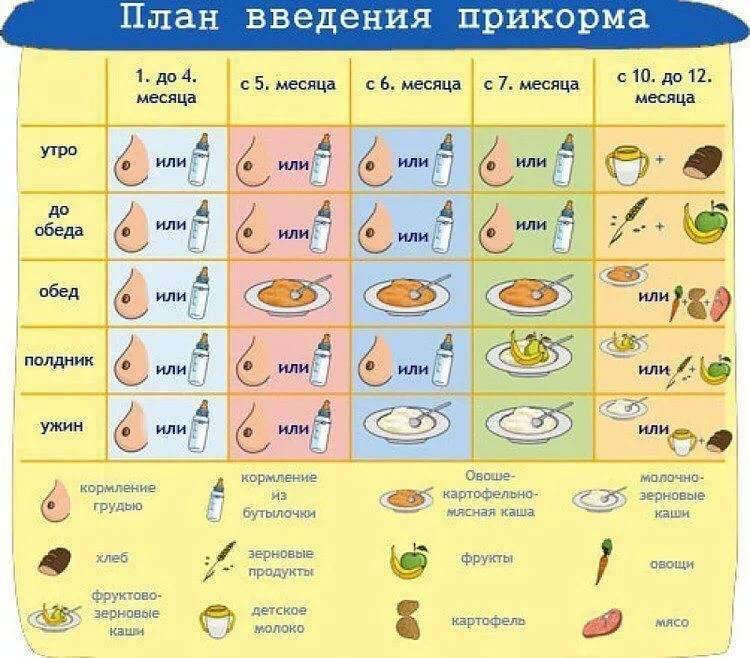 Большая ложка первого прикорма. часть 2. календарь введения прикорма