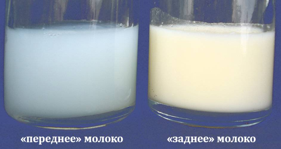 Уникальные свойства грудного молока