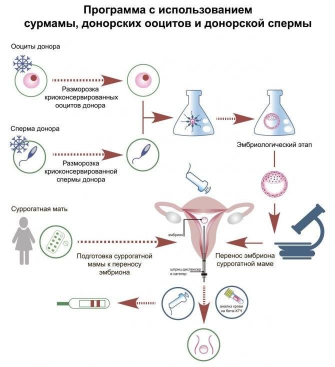 Донор яйцеклетки последствия для донора, опасно ли быть донором яйцеклетки?   за рождение