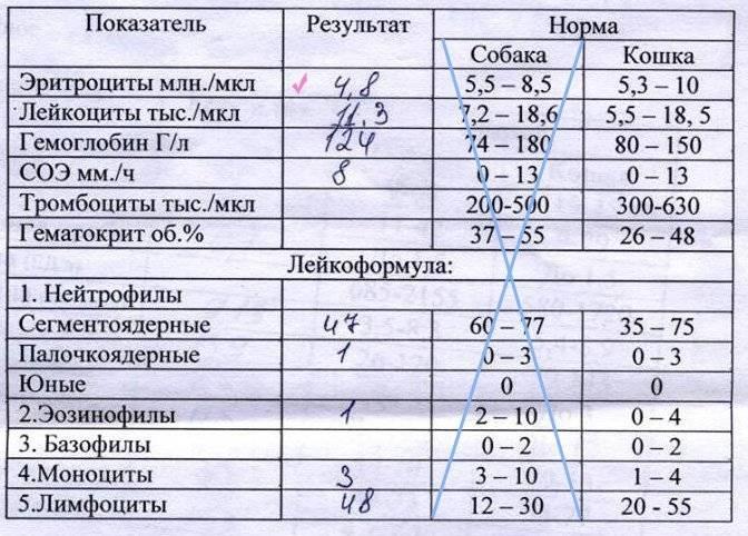 Клинический анализ крови с лейкоцитарной формулой и соэ