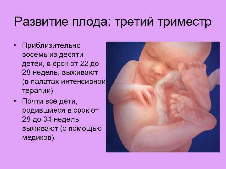 2 триместр беременности