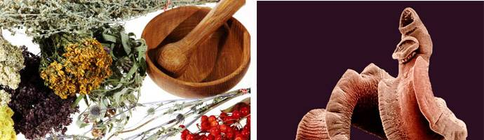 Паразиты – острицы – причины, симптомы и лечение глистов