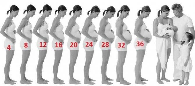 Пятый месяц беременности (17 фото): развитие плода и ощущения беременной, размер живота и как он выглядит