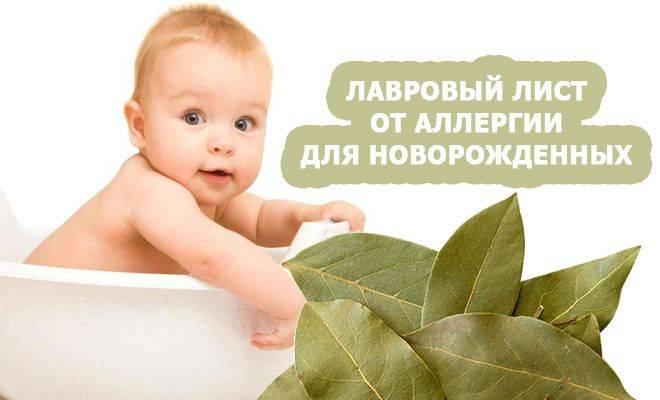 Отвар лавра – панацея при аллергии у малышей: свойства, противопоказание, как готовить