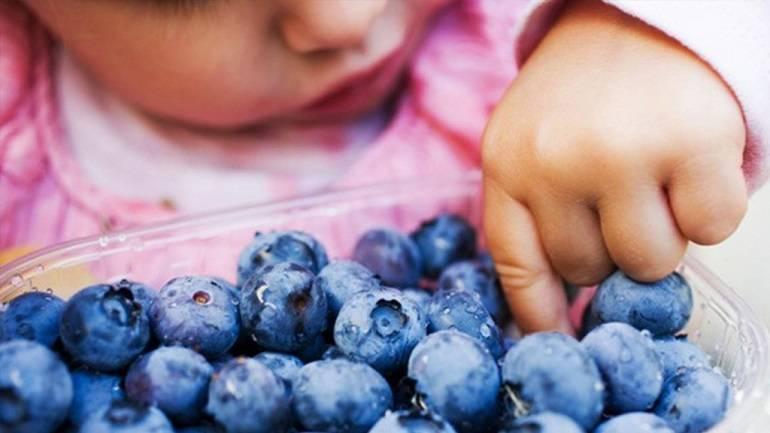 Голубика: полезные свойства и состав ягоды | food and health