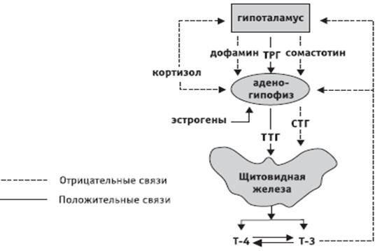 Щитовидная железа. проблемы щитовидной железы и беременность.