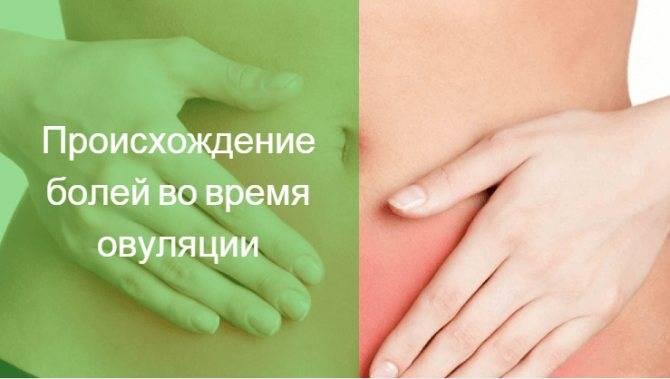 Что такое овуляция: как бороться с бесплодием и нежелательной беременностью