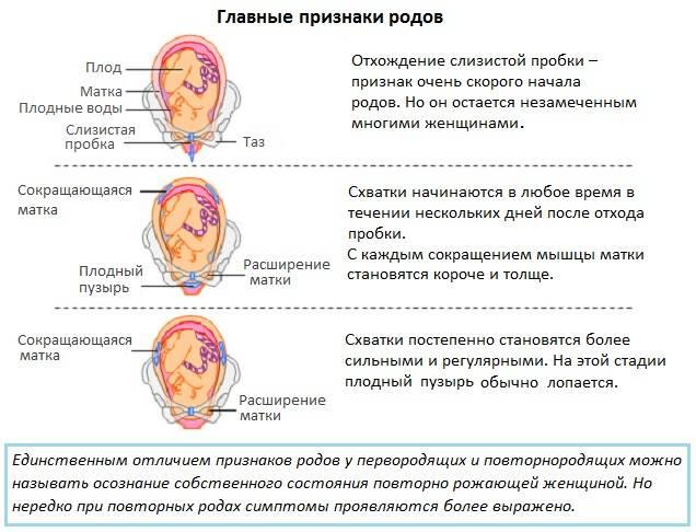 Предвестники родов: какие они на разных сроках беременности и в разных ситуациях (повторнородящие, первородки)