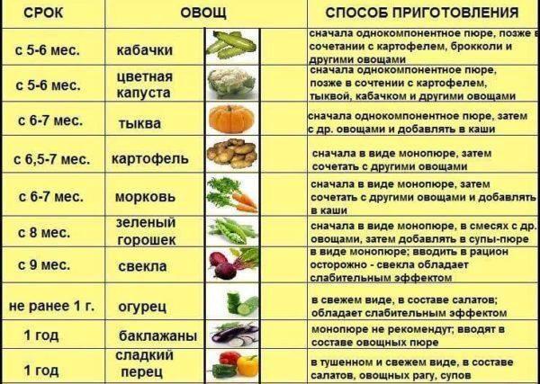Как и когда вводить прикорм