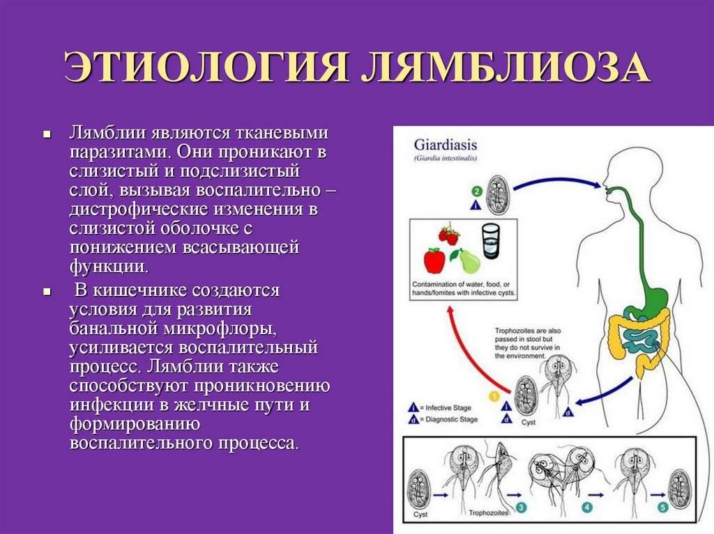 Симптомы лямблиоза | компетентно о здоровье на ilive