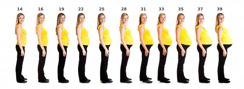 5 месяц беременности – что происходит с малышом, живот на пятом месяце беременности, с какой недели начинается – agulife.ru - agulife.ru