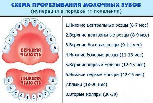 Они идут! все, что нужно знать родителям о прорезывании зубов у детей - здоровые люди