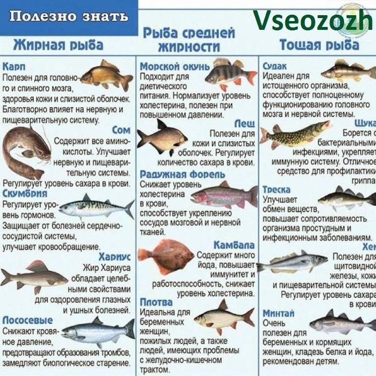 Рыбные блюда для малыша. наш ребенок.